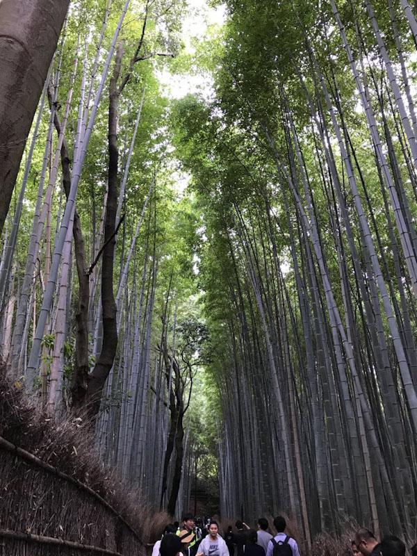 Arashiyama - Bamboo Forest Kyoto