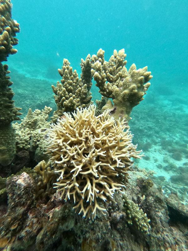 Coral Fogo El Nido