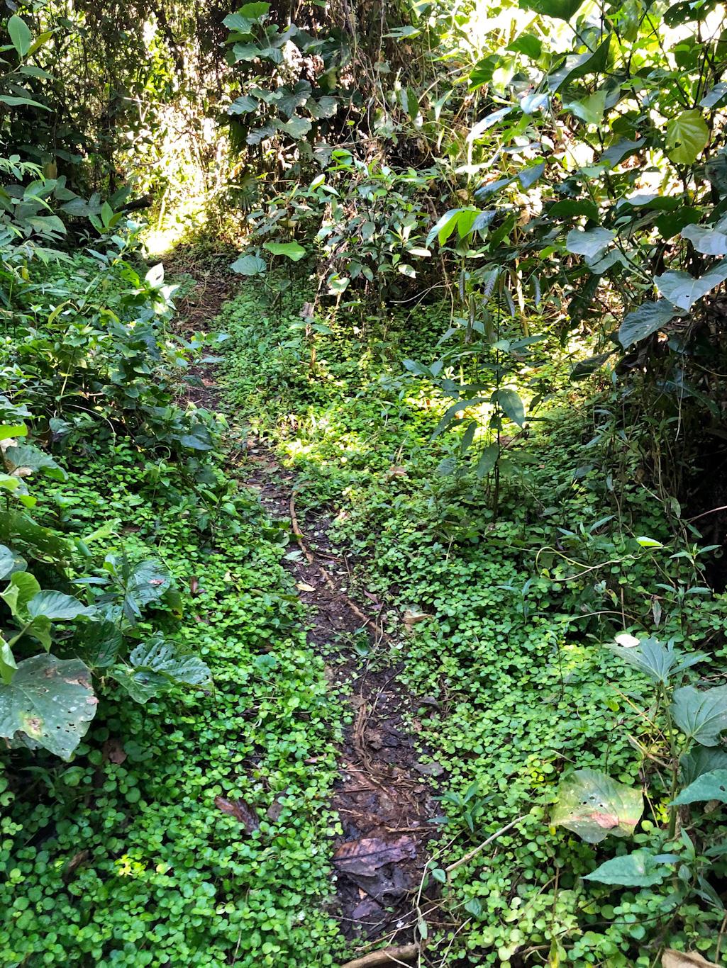 trilha cachoeira do Engenho D água Ilhabela